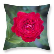 Blossoming Rose Throw Pillow
