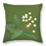 Blossoming Spirea Buds Throw Pillow
