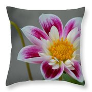 Blossoms Abound Throw Pillow
