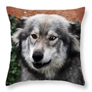 Blue And Brown Eyed Husky Throw Pillow