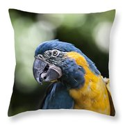Blue And Gold Macaw V5 Throw Pillow