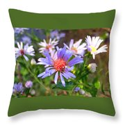 Blue Asters 3 Throw Pillow