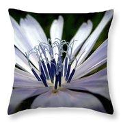 Blue Blossoms  3 Throw Pillow