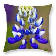 Blue Bonnets Lupinus Throw Pillow