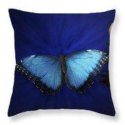 Blue Butterfly Ascending Throw Pillow