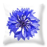 Blue Cornflower Flower Throw Pillow