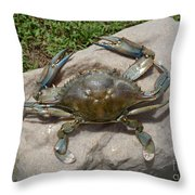 Blue Crab On The Rock Throw Pillow