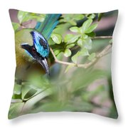 Blue-crowned Motmot Throw Pillow by Rebecca Sherman