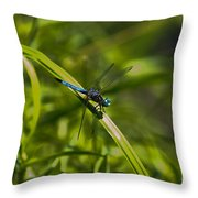 Blue Damsel Dragon Fly Throw Pillow