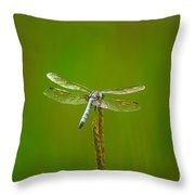 Blue Dasher Dragonfly Throw Pillow