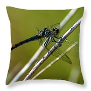 Blue Dragonfly 3 Throw Pillow