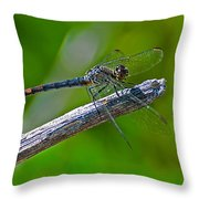 Blue Dragonfly 5 Throw Pillow