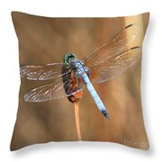 Blue Dragonfly Square Throw Pillow