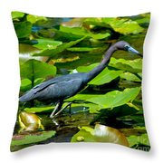 Reddish Egret Among The Lily Pads Throw Pillow