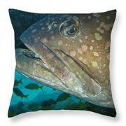 Blue-eyed Grouper Fish Throw Pillow