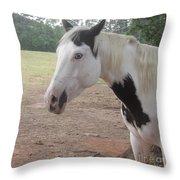 Medicine Hat Horse Throw Pillow