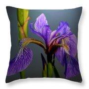 Blue Flag Iris Flower Throw Pillow