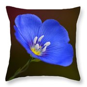 Blue Flax Blossom Throw Pillow