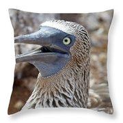 Blue Footed Boobie Galapagos Throw Pillow