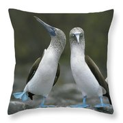 Blue Footed Booby Dancing Throw Pillow