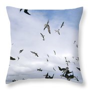 Blue-footed Booby Diving For Herring Throw Pillow
