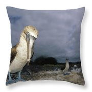 Blue-footed Booby Galapagos Islands Throw Pillow
