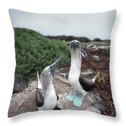 Blue-footed Booby Pair Courting Throw Pillow