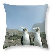 Blue-footed Booby Pair With Nesting Throw Pillow