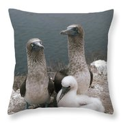 Blue-footed Booby Parents With Chick Throw Pillow