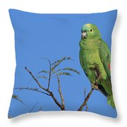 Blue-fronted Parrot Emas National Park Throw Pillow