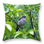 Blue-gray Gnatcatcher Throw Pillow