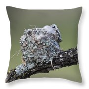 Blue-gray Gnatcatcher Nest Throw Pillow
