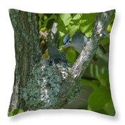 Blue-gray Gnatcatcher Nest Dsb261 Throw Pillow