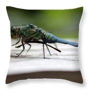 Blue Green Darter Throw Pillow