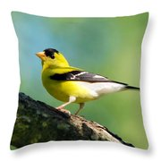 Blue Heart Goldfinch Throw Pillow