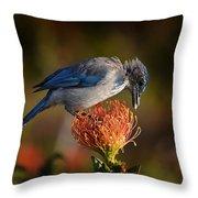Blue Jay 1 Throw Pillow