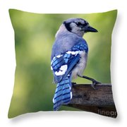 Blue Jay At Feeder Throw Pillow