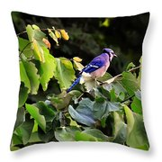 Blue Jay In A Tree Throw Pillow