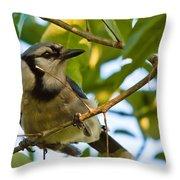 Blue Jay In Hiding Throw Pillow