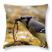 Blue Jay Nest Building Throw Pillow