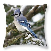 Blue Jay On Hemlock Throw Pillow