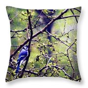 Blue Jay - Paint Effect Throw Pillow