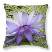 Blue Lotus Seen From Behind Throw Pillow