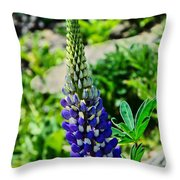 Blue Lupins Throw Pillow