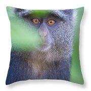 Blue Monkey Cercopithecus Mitis, Lake Throw Pillow