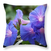 Blue Morning Glory Wildflowers - Convolvulaceae Throw Pillow