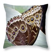 Blue Morpho Butterfly Costa Rica Throw Pillow