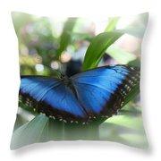 Blue Morpho Butterfly Dsc00575 Throw Pillow