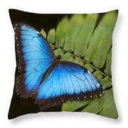 Blue Morpho Butterfly On Fren Dsc00441 Throw Pillow