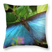 Blue Morpho Throw Pillow